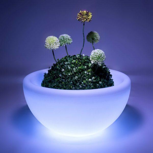 Светящаяся ваза с растениями